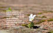 beautiful-small-flower-hd-wallpaper-437311 copia