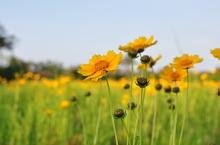 Flores-do-Campo-6