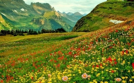 Pictures-of-Flower-Fields-