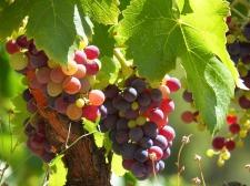wine-1580208_960_720